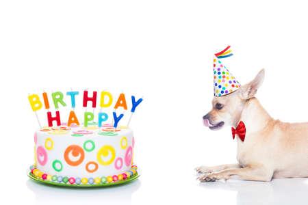 chihuahua hond hongerig naar een gelukkige verjaardagscake met kaarsen, het dragen van rode stropdas en feest hoed, geïsoleerd op een witte achtergrond