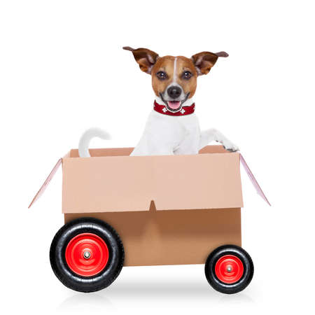 transportation: mail  delivery  jack russell dog in a big moving box on wheels ,isolated on white background