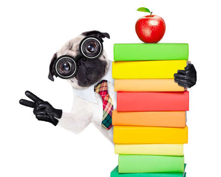 dumb: pug dog behind a stack of books very clever , smart but with dumb nerd glasses, isolated on white background Stock Photo