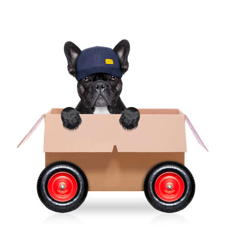 white work: mail  delivery  french bulldog dog in a big moving box on wheels  , isolated on white background