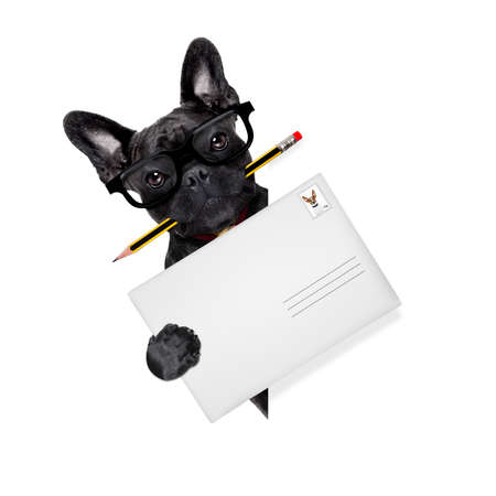 post mail: mail delivery french bulldog dog , holding pencil and post envelope,behind blank white banner or placard,  isolated  on white background