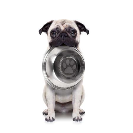 hungrig Mops Hund mit Mund, isoliert auf weißem Hintergrund hält Schüssel Standard-Bild