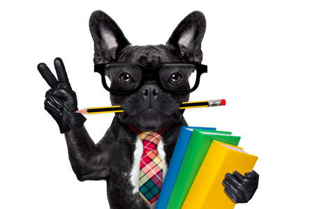 cool  school french bulldog dog, with stack of books and pencil in mouth , victory and peace fingers ,isolated on white background Foto de archivo