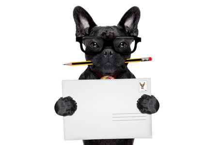 Mail-Zustellung Französisch Bulldog Hund, hält Bleistift und Post-Umschlag, isoliert auf weißem Hintergrund