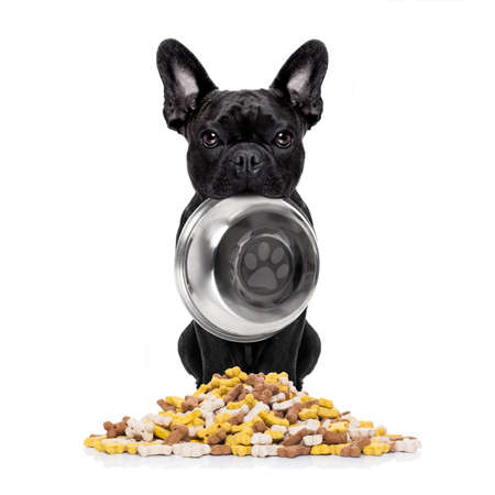french: hungry  french bulldog  dog holding bowl with mouth  behind food mound , isolated on white background