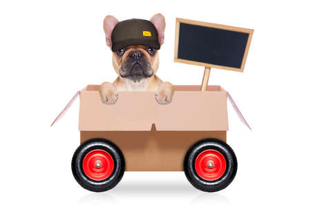 mailmen: mail  delivery  french bulldog dog in a big moving box on wheels  with blank placard or blackboard, isolated on white background Stock Photo