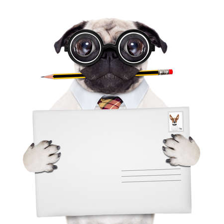 driver cap: mail delivery pug dog , holding pencil and post envelope, isolated  on white background