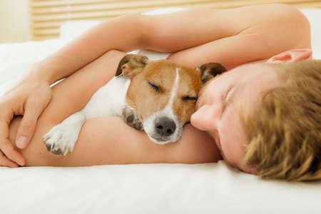 Jack-Russell-Hund im Bett ruhen oder schlafen, mit dem Besitzer im Schlafzimmer träumen dicht beieinander
