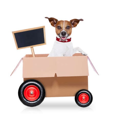 jack in a box: mail  delivery  jack russell dog in a big moving box on wheels  with blank placard or blackboard, isolated on white background