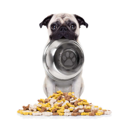 frenchie: hungry  pug dog holding bowl with mouth  behind food mound , isolated on white background Stock Photo