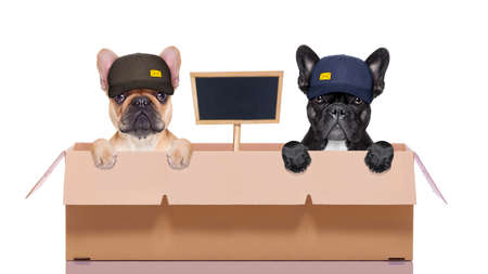 big: mail  delivery  couple or row of dogs in a big moving box , with blank placard or blackboard ,  isolated on white background