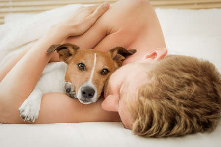 jack russell dog in bed resting or sleeping , with owner dreaming in bedroom under the blanket