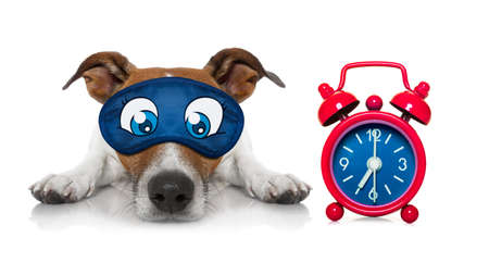 overslept: jack russell dog resting ,sleeping or having a siesta  with a clock and eye mask Stock Photo