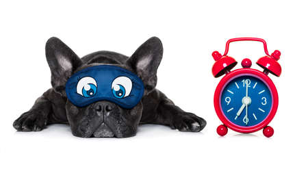 french bulldog dog sleeping, resting or relaxing on the ground isolated on white background with eye mask