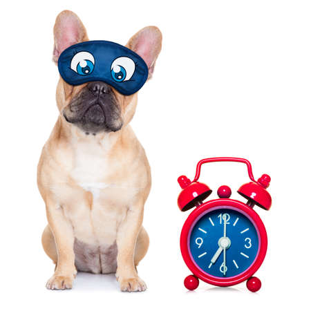 overslept: french bulldog dog sleeping, resting or relaxing on the ground isolated on white background with eye mask