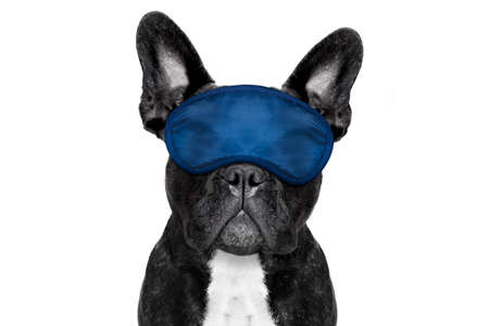 overslept: french bulldog dog  resting ,sleeping or having a siesta  with   eye mask, isolated on white background