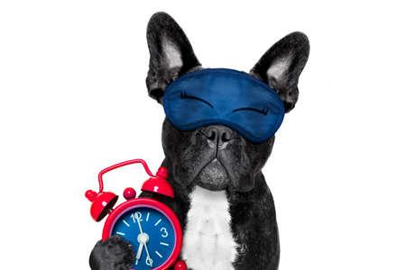 francés bulldog descansando, durmiendo o que tienen una siesta con el reloj de alarma y máscara de ojos, aislado en fondo blanco