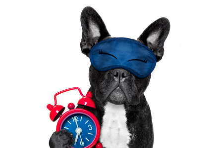 french bulldog dog  resting ,sleeping or having a siesta  with alarm  clock and eye mask, isolated on white  background