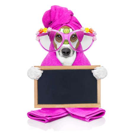 masaje facial: perro Jack Russell relajante con máscara de belleza en el centro de spa y de bienestar máscara de crema hidratante y pepino, aislado en fondo blanco