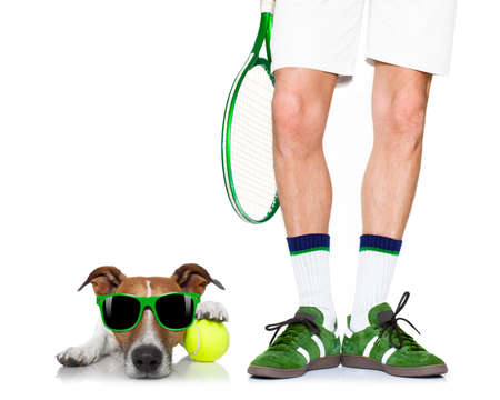 jack russell dog with owner as tennis player with ball and tennis racket or racquet isolated on white background