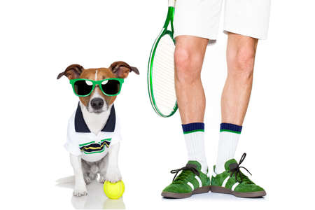 racquet: jack russell dog with owner as tennis player with ball and tennis racket or racquet isolated on white background