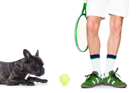 racquet: french bulldog dog with owner as tennis player with ball and tennis racket or racquet isolated on white background