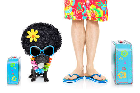 hawaiian lei: french bulldog dog and owner ready to go on summer holidays vacation with luggage and bags , isolated on white background Stock Photo