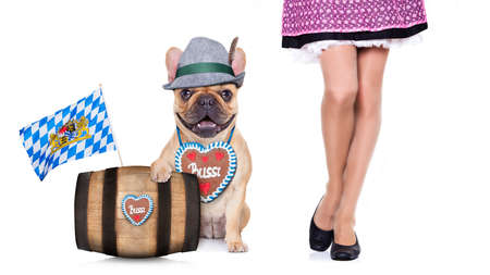 beerfest: french bulldog  dog with beer barrel and gingerbread heart and bavarian owner , isolated on white background