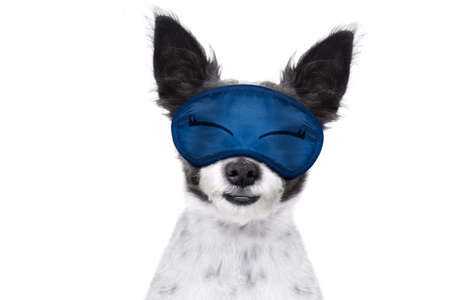 overslept: dog  resting ,sleeping or having a siesta  with   eye mask, isolated on white background Stock Photo