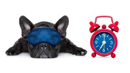 francés bulldog dormir, descansar o relajarse en el suelo aislado en el fondo blanco con máscara para los ojos