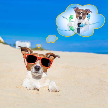 embed: jack russell dog  buried in the sand at the beach on summer vacation holidays , wearing red sunglasses thinking of work