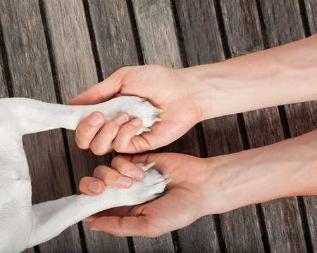 animals together: dog and owner handshaking or shaking hands  and paw as a team or friendship and in love