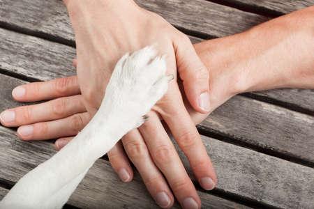 cão e handshaking proprietário ou mãos trêmulas ea pata como uma equipe ou de amizade e no amor