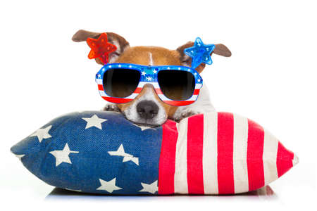 national hero: jack russell dog celebrating 4th of july independence day holidays with american flag and sunglasses, isolated on white background