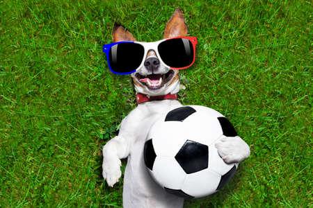 jugador de futbol: Francia Jack Russell perro campeonato de fútbol con el balón de fútbol de fútbol y la bandera francés tumbado en la hierba en el parque