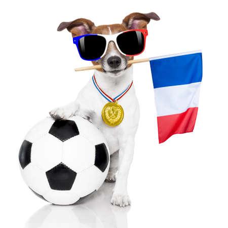 Frankreich Fußball-Meisterschaft Jack-Russell-Hund mit Fußball Fußball Ball und Französisch Flagge isoliert auf weißem Hintergrund