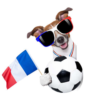 funny glasses: France football championship jack russell dog with soccer football ball and french flag isolated on white background Stock Photo