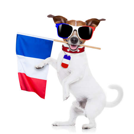 championship: France football championship jack russell dog and french flag isolated on white background