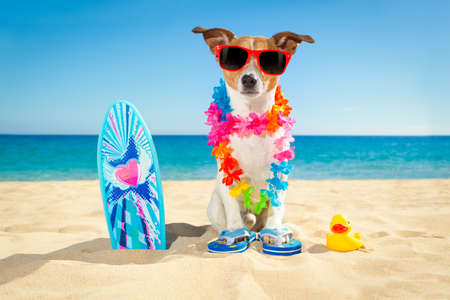 jack russell: jack russell dog at the beach with a surfboard wearing sunglasses and flower chain at the ocean shore on summer vacation holidays