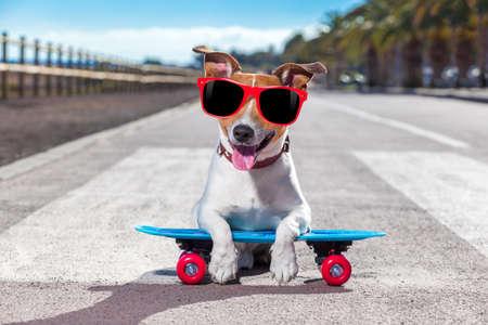 잭 러셀 테리어 강아지는 해변에 가까운 여름 휴가에 선글라스와 함께 스케이트 보드와 스케이트 보드를 타고 스톡 콘텐츠