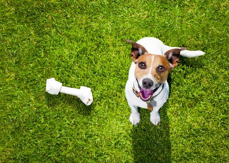 Jack Russell Hund Mit Besitzer Mit Leckerchen In Der Hand