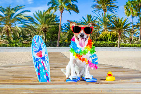 sandal tree: jack russell dog at the beach with a surfboard wearing sunglasses and flower chain at the ocean shore and palms on summer vacation holidays