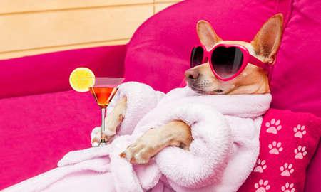 Chien chihuahua relaxant et allongé, dans le centre de bien-être du spa, portant un peignoir et des lunettes de soleil amusantes, cocktail de martini inclus