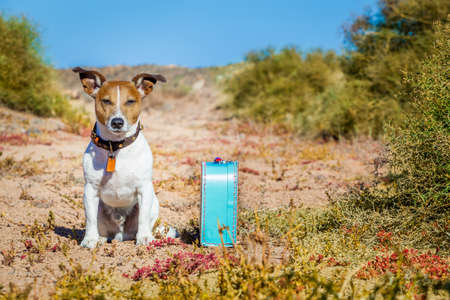 come home: Jack russell dog abandoned and left all alone on the road or street, with luggage bag  , begging to come home to owners,