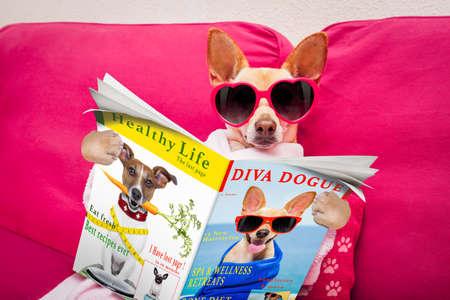 periodicos: perro chihuahua que se relaja con máscara de belleza en el centro de spa, leyendo una revista y la noticia en el periódico