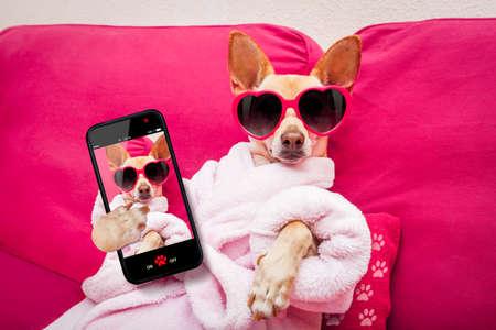 perros graciosos: perro chihuahua que se relaja y la mentira, en el centro de spa, que llevaba una bata de baño y gafas de sol divertidas que toman una autofoto Foto de archivo