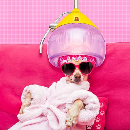 perro chihuahua que se relaja y la mentira, en el centro de spa, que llevaba una bata de baño y gafas de sol divertidas bajo el capó de secado