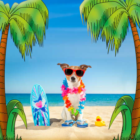 funny glasses: jack russell dog at the beach with a surfboard wearing sunglasses and flower chain at the ocean shore on summer vacation holidays