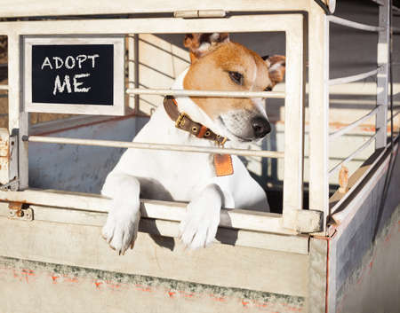home: jack russell  abandoned  dog and left all alone in animal shelter or cage, begging to be adopted and come home to owners