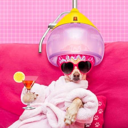 perro chihuahua que se relaja y la mentira, en el centro de spa, que llevaba una bata de baño y gafas de sol divertidas con secador de pelo o el secado de la campana de beber un cóctel